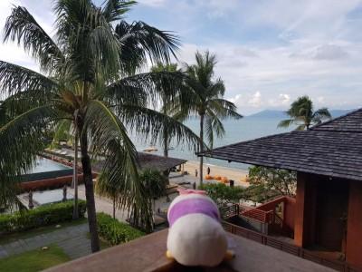 코사무이5박+싱가포르1박(6박9일) 신혼여행 후기~♥